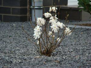 Basalt mit Blume