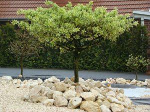 Jurabrocken Baumeinfassung