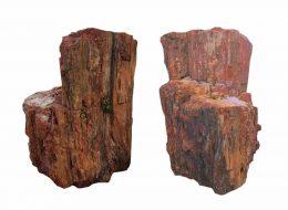 Versteinertes Holz-Erftstadt
