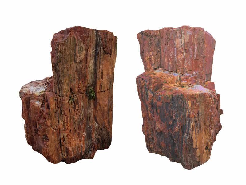 Arizona Holz