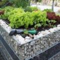 Hochbeet Gartenarbeit Salat