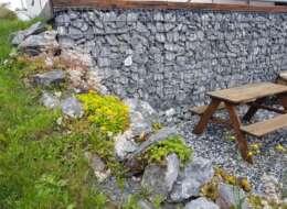 Trockenmauer-Pflanzen